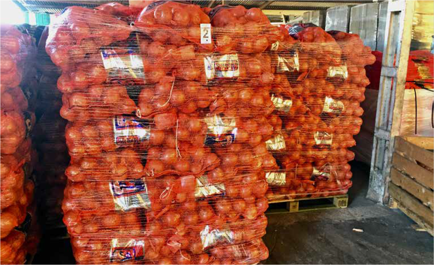 Onions on Pallets